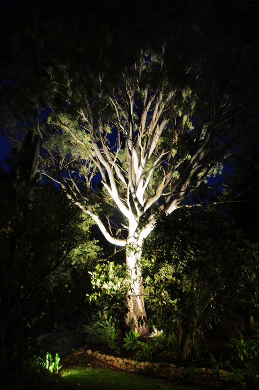 Lighting Up Gum Trees With 27w Led Outdoor